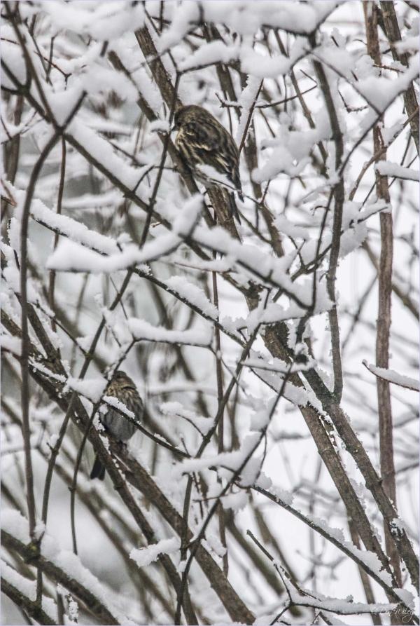 Cold Birds?