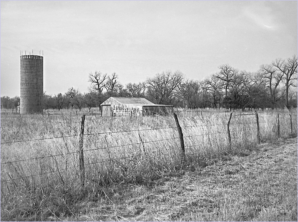 Remains of a homestead