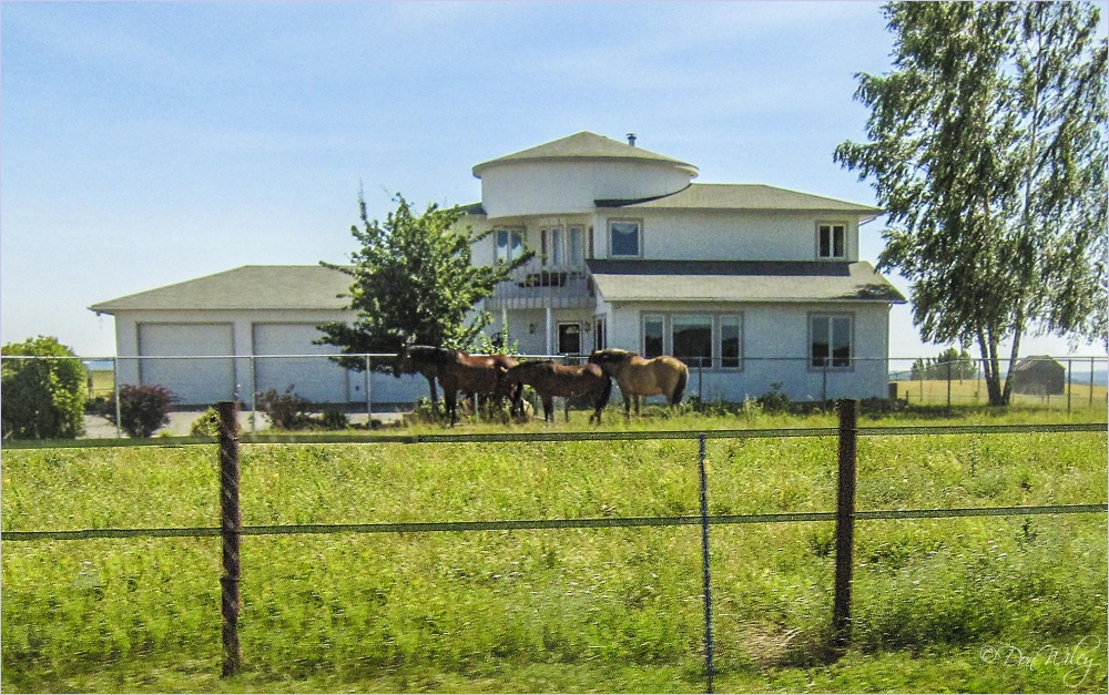 Horses Out Front