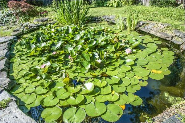 David's Pond