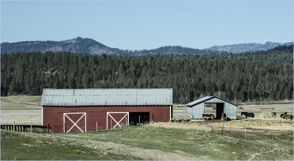 Barn and animals