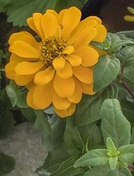 A Friend's Flower