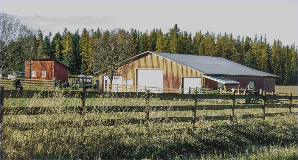Barn, Shed and Cow