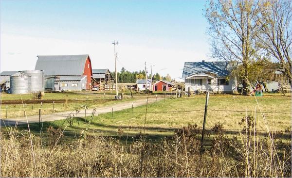 Farm with Horse Feeding