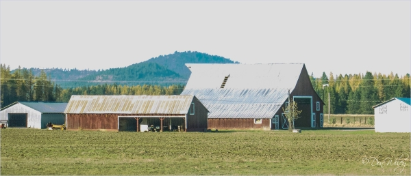 Spacious Farmyard