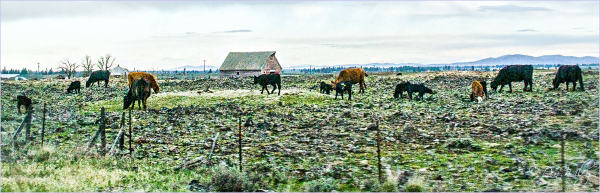 A Rocky Pasture