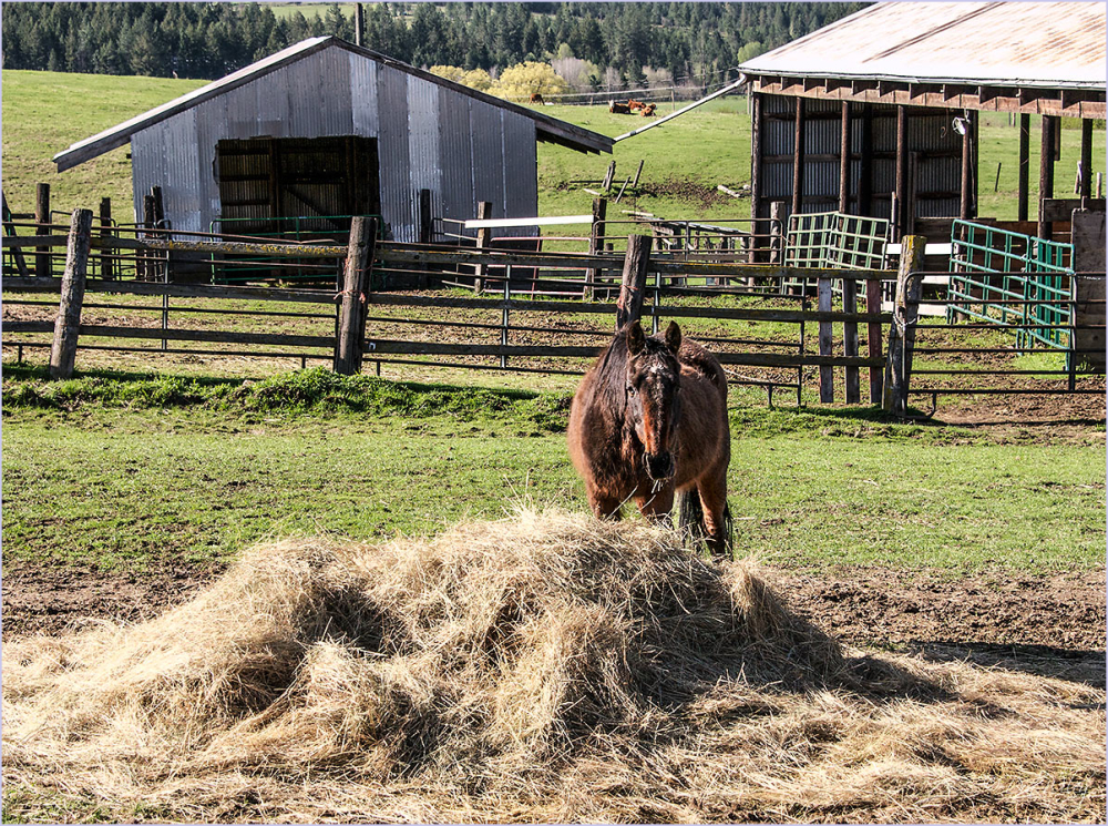 A Horse and Hay
