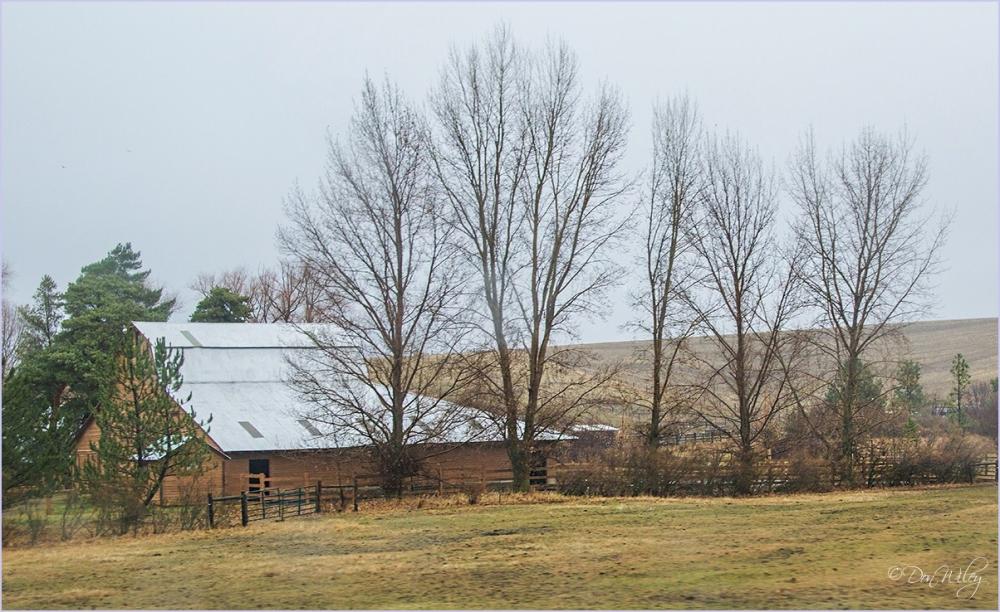 Barn - Trees