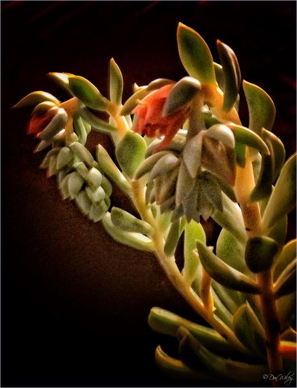 A Succulent