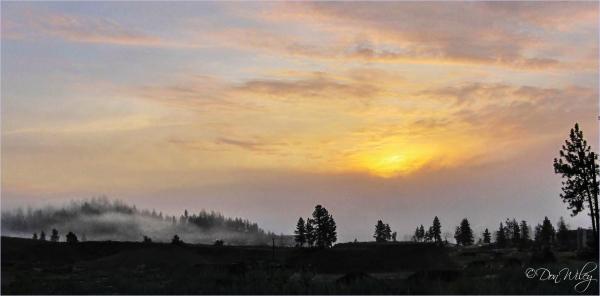 Milld Sunrise