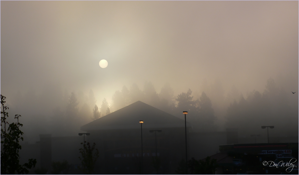 Foggy Sunrise