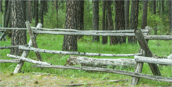 Pole Fence