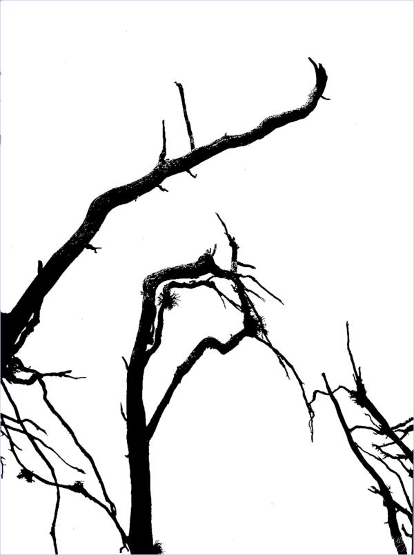 Nature's Design