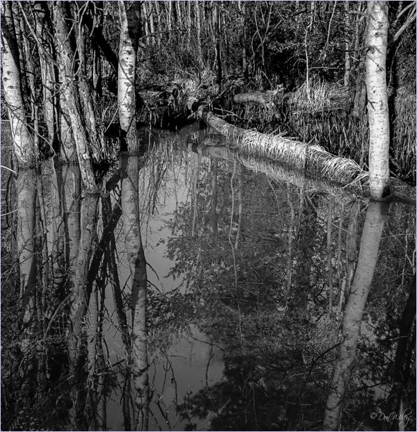 Wetland Pool