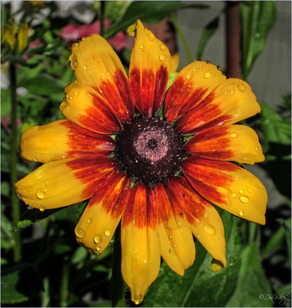 David's Flower