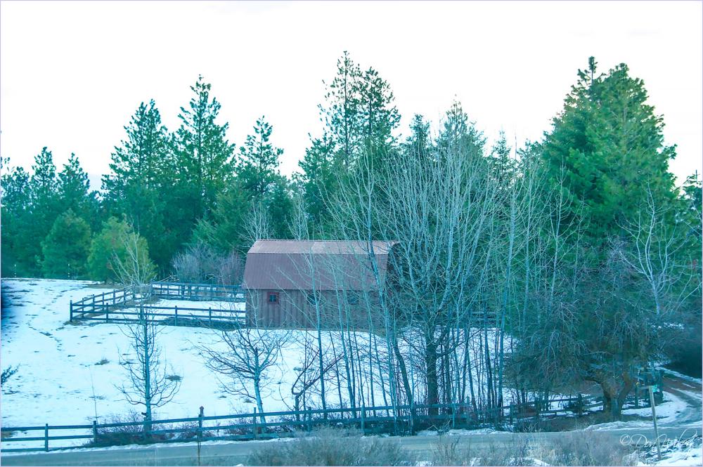Barn Thru Trees