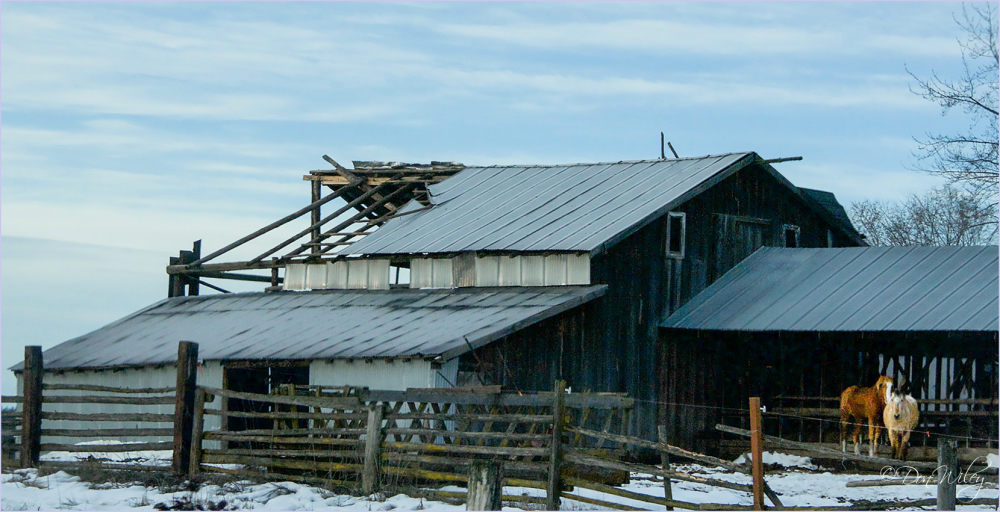 Two Horses, Failing barn