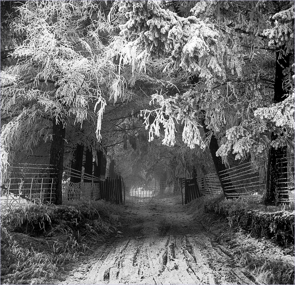 Oregon Frost