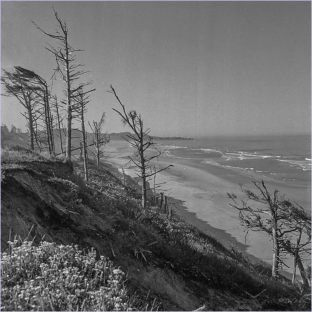 An Ocean View