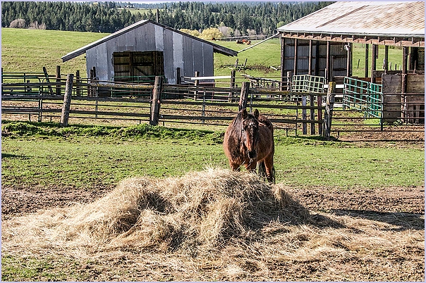 Horse - Plenty Of Hay
