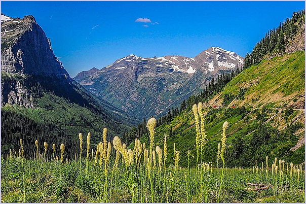 Bear Grass Mountains