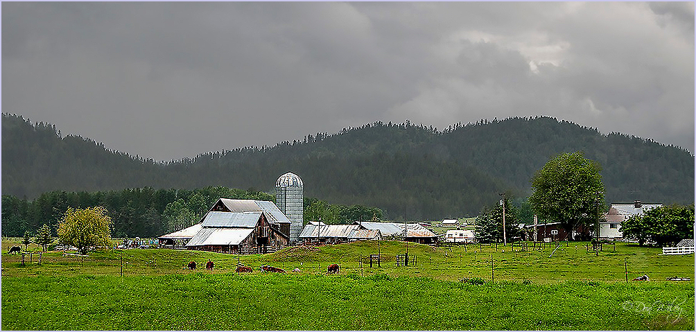 Western Washington Farm