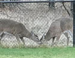 """Deer Eating a """"Food"""" Block"""