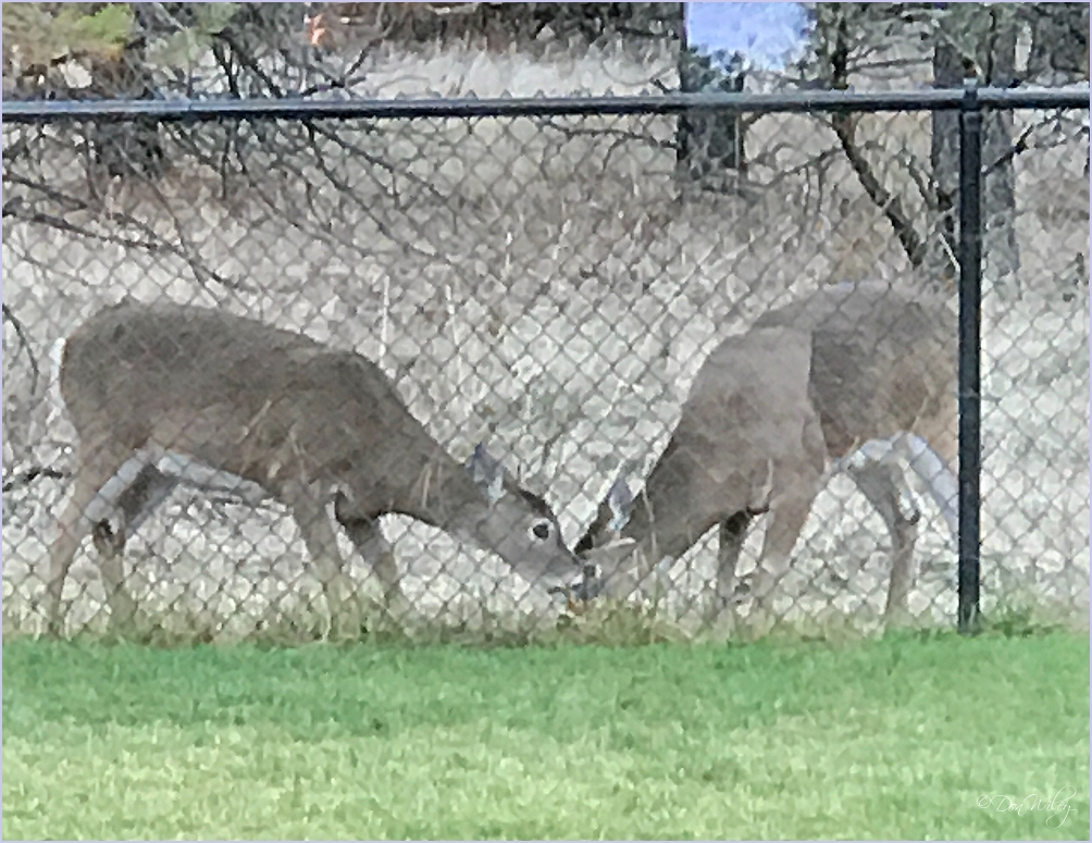 "Deer Eating a ""Food"" Block"