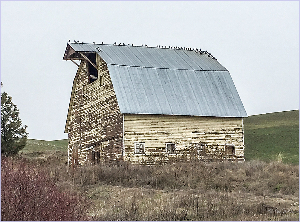 It's A Bird's Barn
