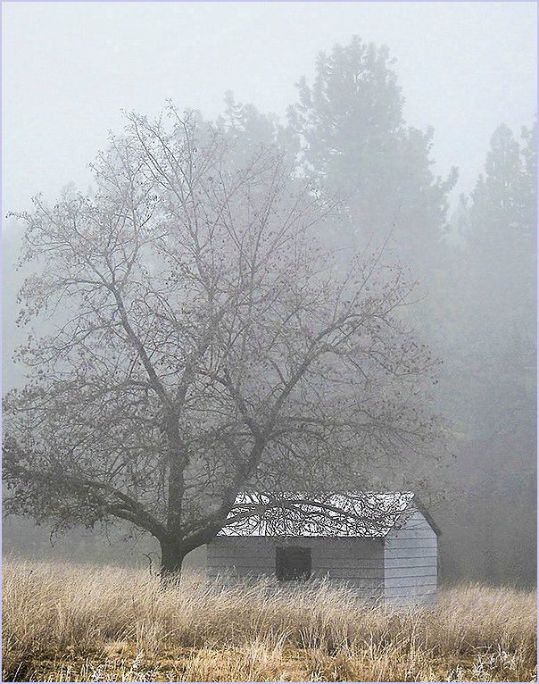 Foggy Shed