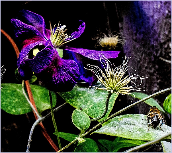 Late Clematis and more