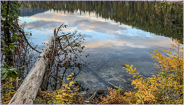 Log Autumn
