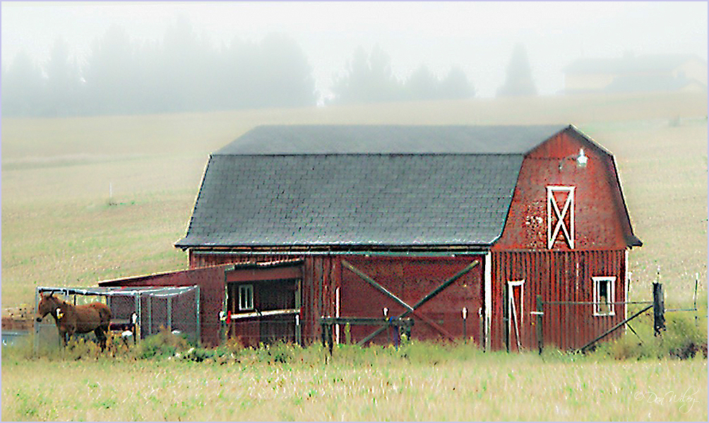 Mule and Barn