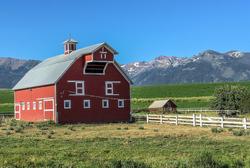 Barn and Scene