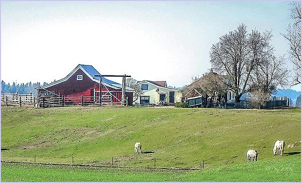 Peone Farm