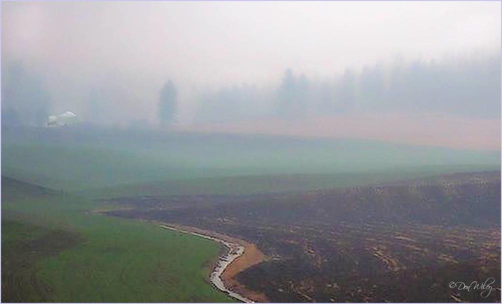 Green Bluff Fog