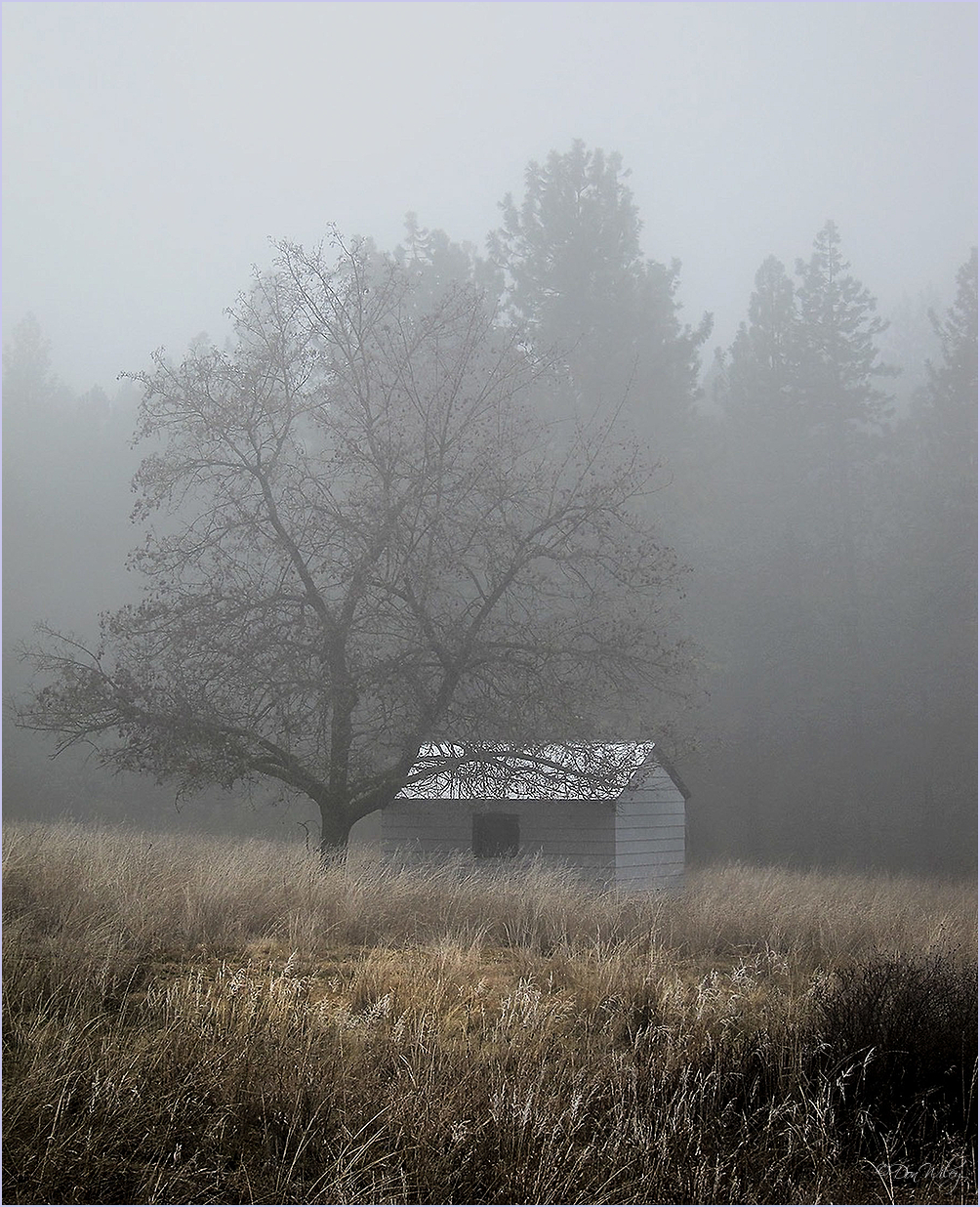 Shed in Fog