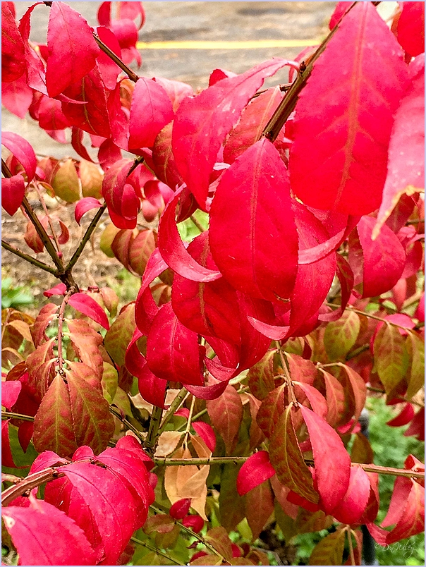 Red Leaves