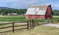 Fences and Barn