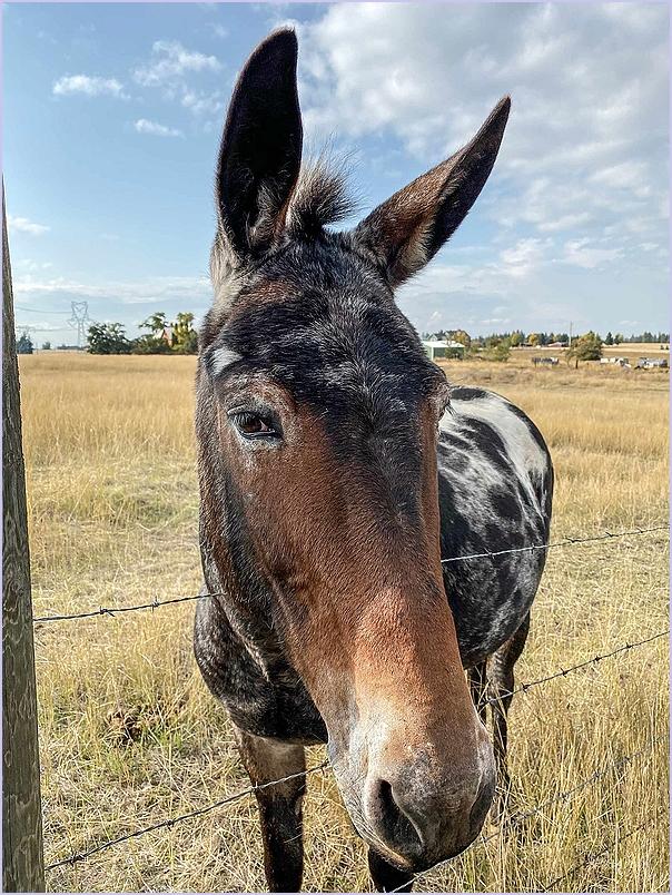 Friendly Mule