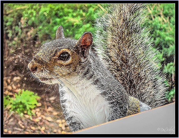 Squirrel Closer