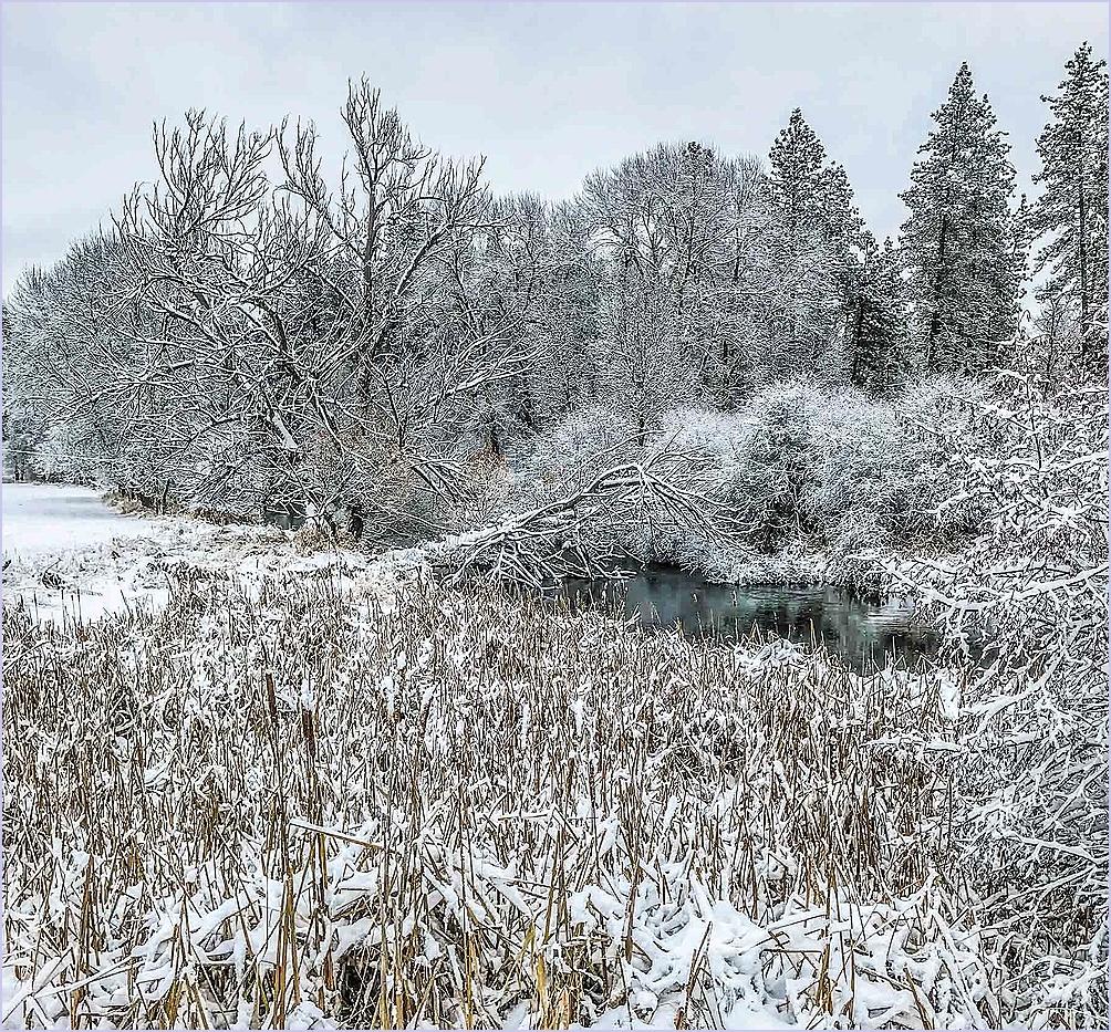 Frosty Bushes