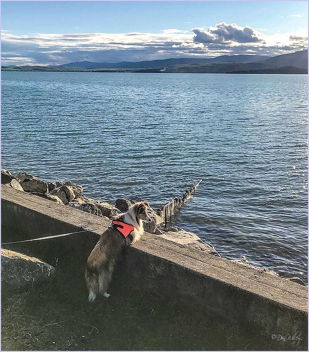 Sugar Doggie  and Sea