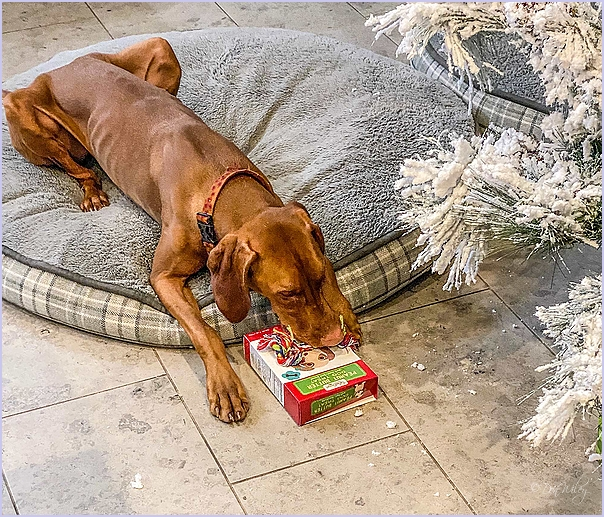 Dog's Gift