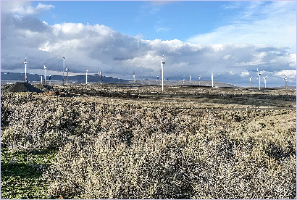 Sage and Windmills