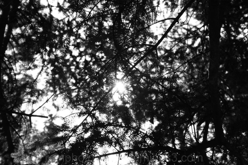 Sunlight Threw the Branches