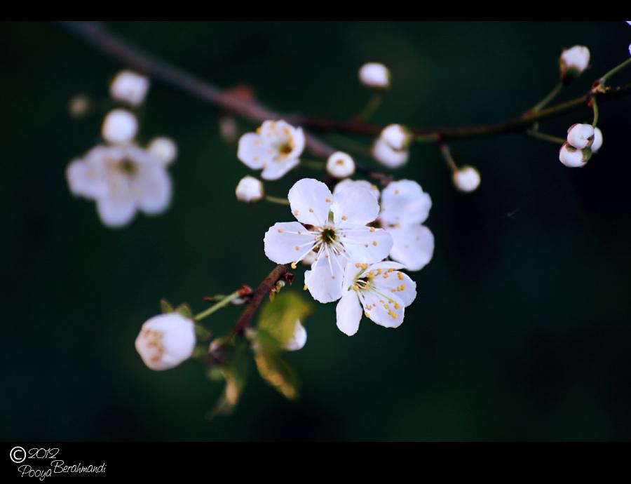 White flower... i guess