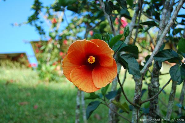 A centered orange flower on a blurred background.