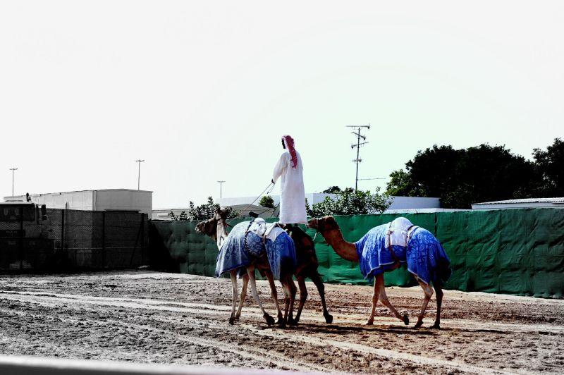 Camel Jockey Stunt