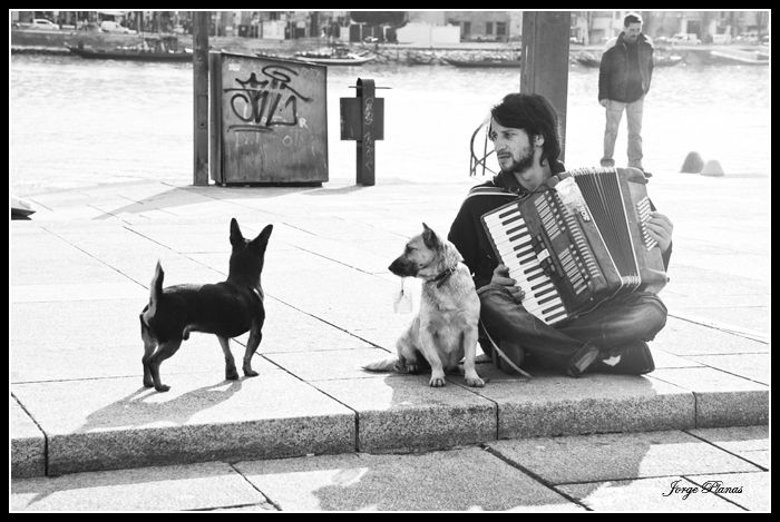 Armonia Dog